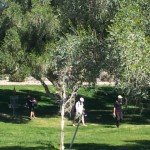 Disc Golf Course Fountain Hills AZ