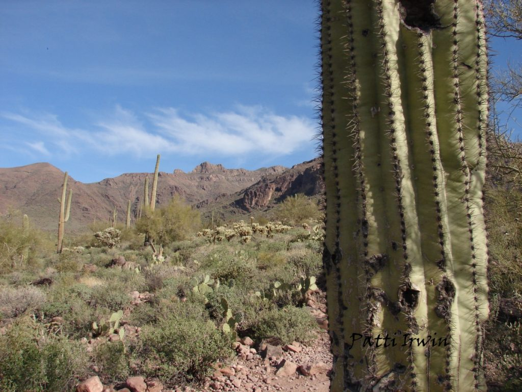 Optimized-watermark cactus